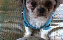 I Love My Puppy: Thankful Thursday