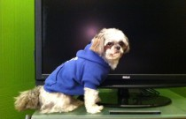 TV Shows for a Canine Audience: An Espentorial