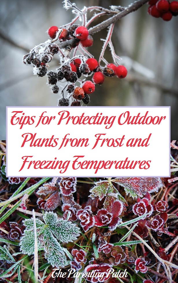 Tips for Protecting Outdoor Plants from Frost and Freezing Temperatures
