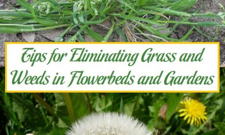 Tips for Eliminating Grass and Weeds in Flowerbeds and Gardens