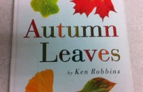'Autumn Leaves' Book Review
