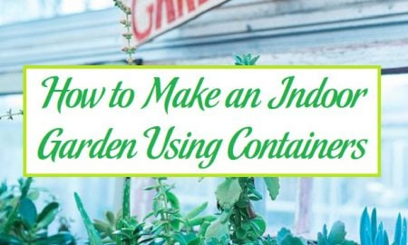 How to Make an Indoor Garden Using Containers