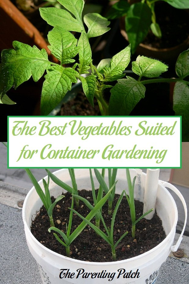 The best vegetables suited for container gardening - Best vegetables for container gardening ...