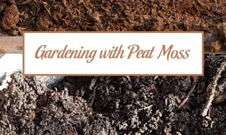 Gardening with Peat Moss