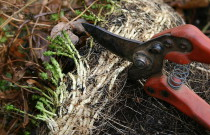 How to Use and Buy Pruning Shears