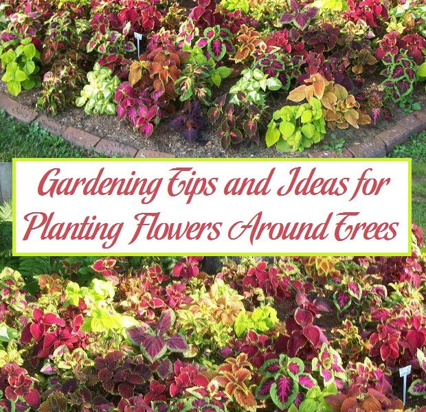 gardening tips and ideas for planting flowers around trees parenting patch