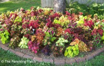 Gardening Tips and Ideas for Planting Flowers Around Trees