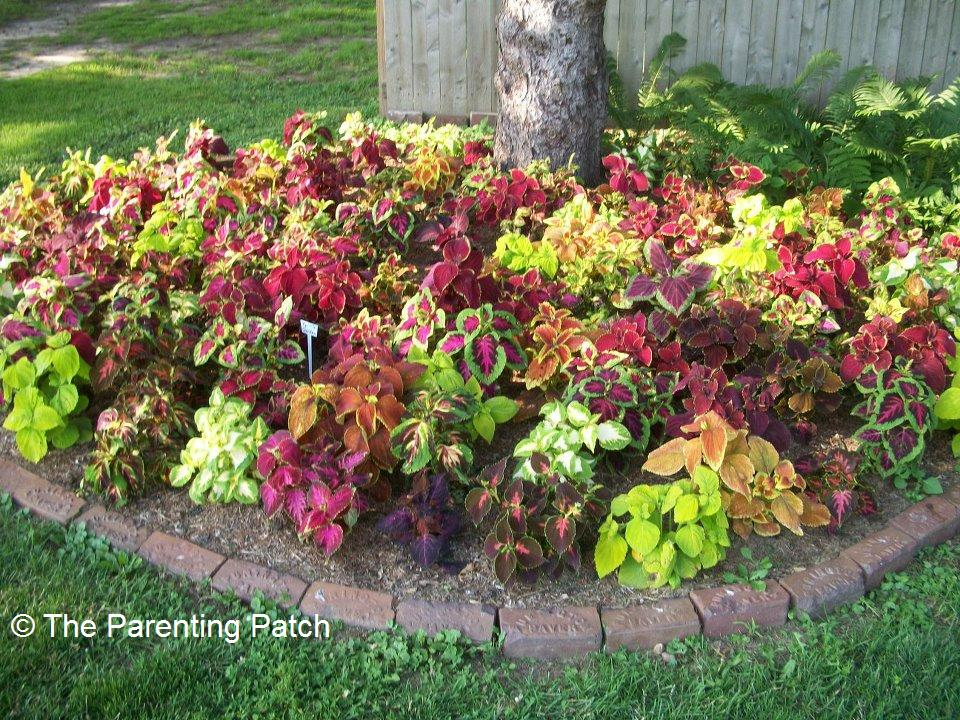 Gardening Tips and Ideas for Planting Flowers Around Trees ...