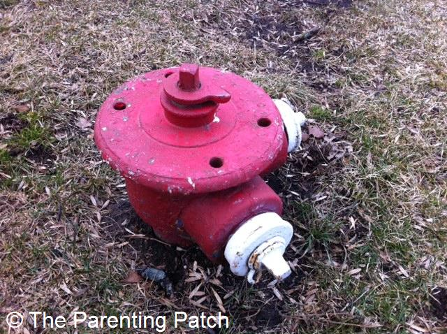 Short Red with White Fire Hydrant
