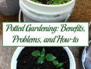 Potted Gardening: Benefits, Problems, and How-to
