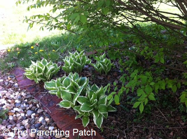 Tips for flower planting in the shade parenting patch for Garden city trees