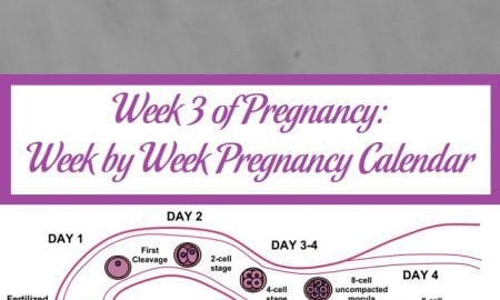 Week 3 of Pregnancy: Week by Week Pregnancy Calendar