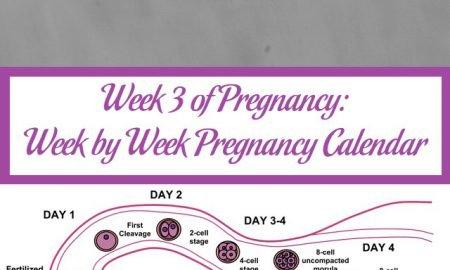 Week 3 of Pregnancy: Week by Week Pregnancy Calendar
