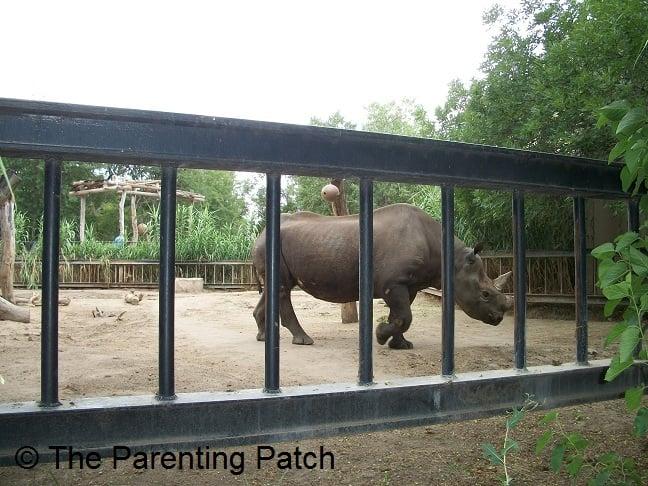 Rhinoceros at the Lee Richardson Zoo 1