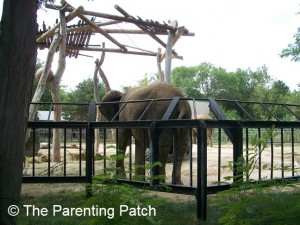 Elephant at the Lee Richardson Zoo