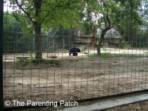 Bear at the Lee Richardson Zoo