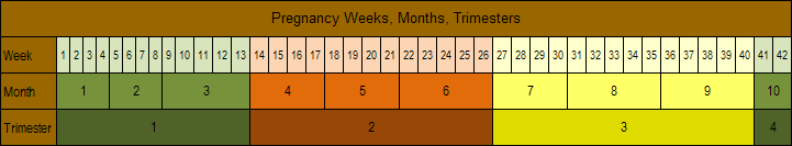 Weeks, Months, and Trimesters of Pregnancy