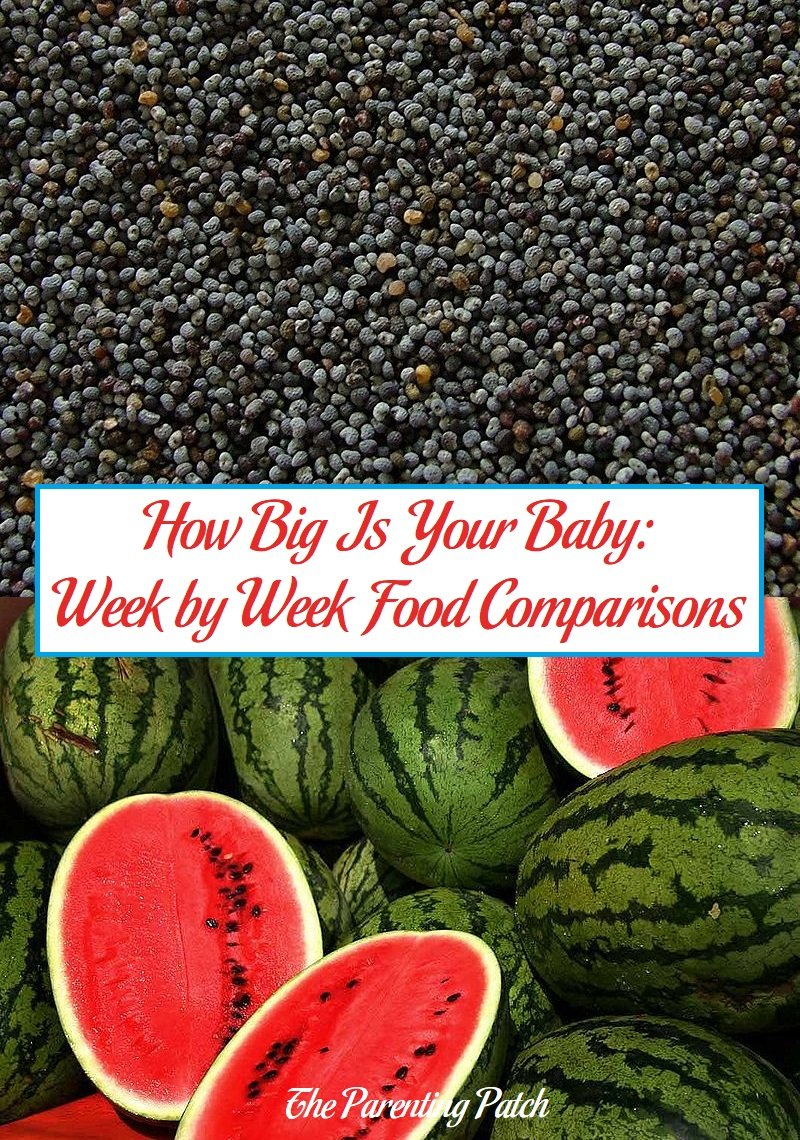 How Big Is Your Baby Week By Week Food Comparisons Parenting Patch