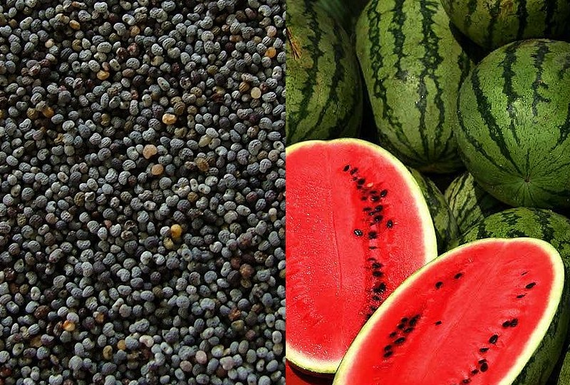 From Poppy Seed to Watermelon: How Big Is Baby?