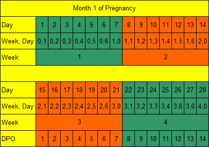 Month 1 of Pregnancy