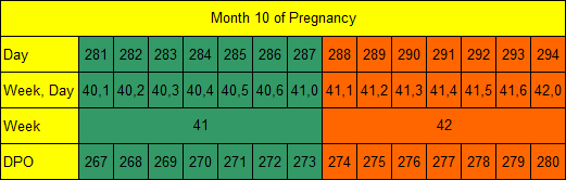 Month 10 of Pregnancy