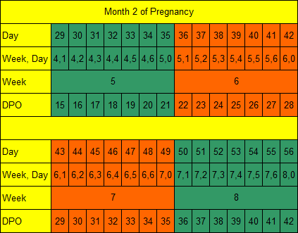 Month 2 of Pregnancy