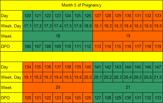 Month 5 of Pregnancy