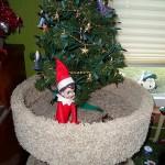The Elf on the Cat Tree