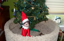 The Elf on the Cat Tree: The Elf on the Shelf Day 9
