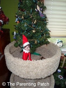 The Elf on the Cat Tree