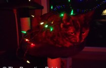 A Christmas Kitty: Day 10 of 25 Days of Christmas