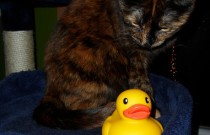 The Duck and the Cat: The Rubber Ducky Project Week 3