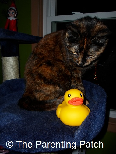 The Duck and the Cat