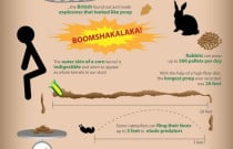 Facts About Poop Infographic