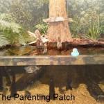 The Duck at the Dauphin Island Estuarium