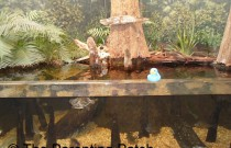 The Duck at the Dauphin Island Estuarium: The Rubber Ducky Project Week 6