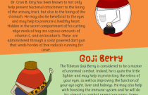 Super Food Berries: An Infographic from Raw Food Online