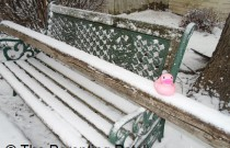The Duck on the Snowy Bench: The Rubber Ducky Project Week 9