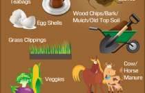 Composting 101: An Infographic from Hometown Dumpster Rental