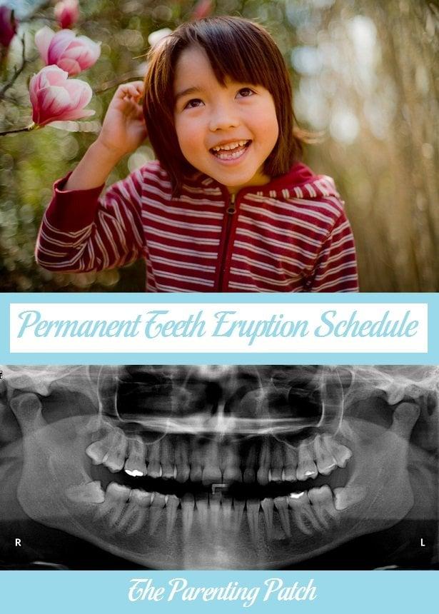 Permanent Teeth Eruption Schedule