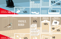 Annual Pet Cost: An Infographic from Best Bully Sticks