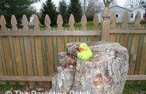The Duck on the Tree Stump: The Rubber Ducky Project Week 22