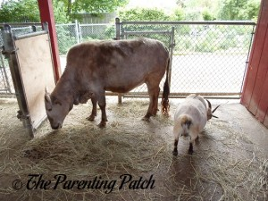 Cow and Goat at the Peoria Zoo