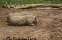 Animals of the Peoria Zoo: Wordless Wednesday