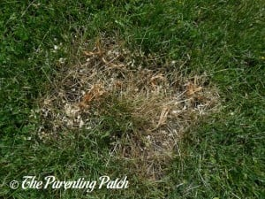 Dead Thistle in Grass from Vinegar