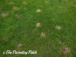 Yellow Patched in Grass from Vinegar