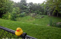 The Duck and the Bald Eagle: The Rubber Ducky Project Week 27