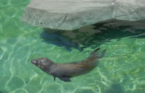 Animals of the Miller Park Zoo: Wordless Wednesday