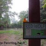 The Duck and the Red Wolves 2