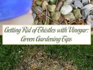 Getting Rid of Thistles with Vinegar: Green Gardening Tips